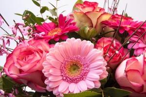 roses-279171_640